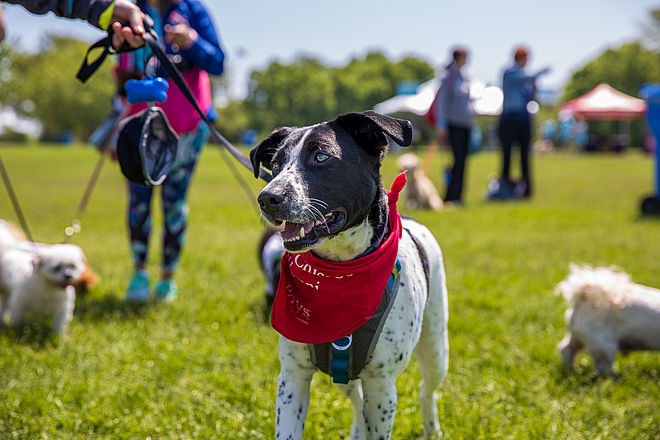 PAWS Chicago 5k | PAWS Chicago