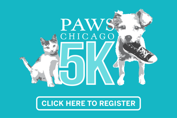 Pets Available Paws Chicago