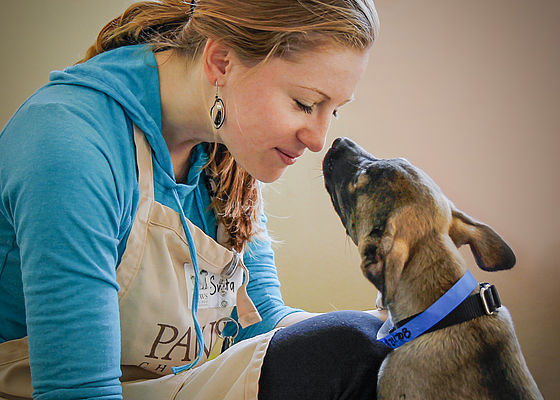 working with dogs paws chicago