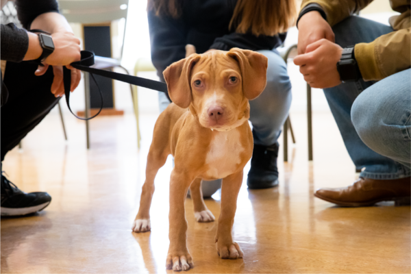 Adoption Process Paws Chicago
