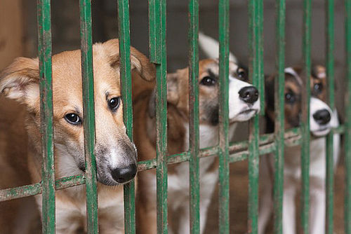 Illinois Takes a Stand Against Puppy Mills | PAWS in the