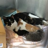 URGENT! Nursing Moms w/ Kittens Need Rescue-Foster!!
