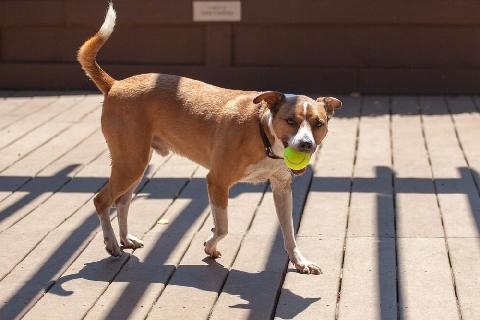 Watch Dogs  Progression Tracker