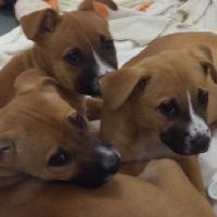 Reese, Riley & Reagan