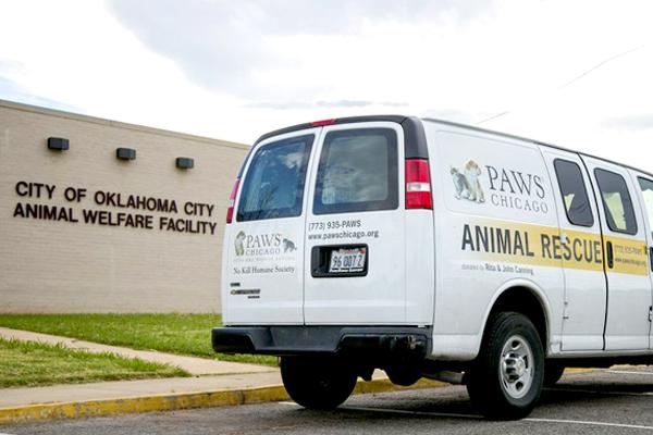 Disaster Response | PAWS Chicago