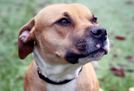 b524a4a7b19f In Chicago, stray and lost pets are impounded at two main locations: