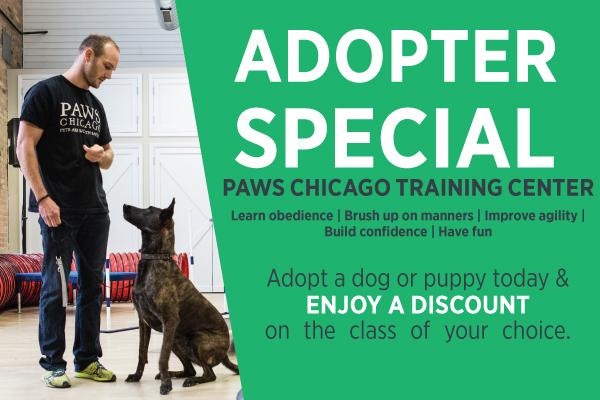 Dog Training Classes Paws Chicago