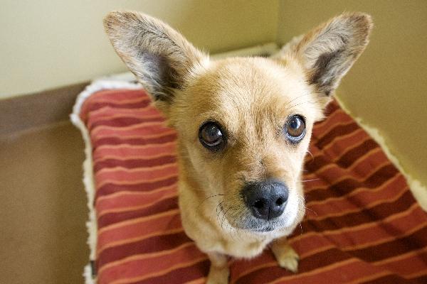 Adopt A Dog Paws Chicago