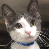 Pets Available | PAWS Chicago